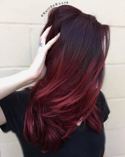 Dark Red Mums