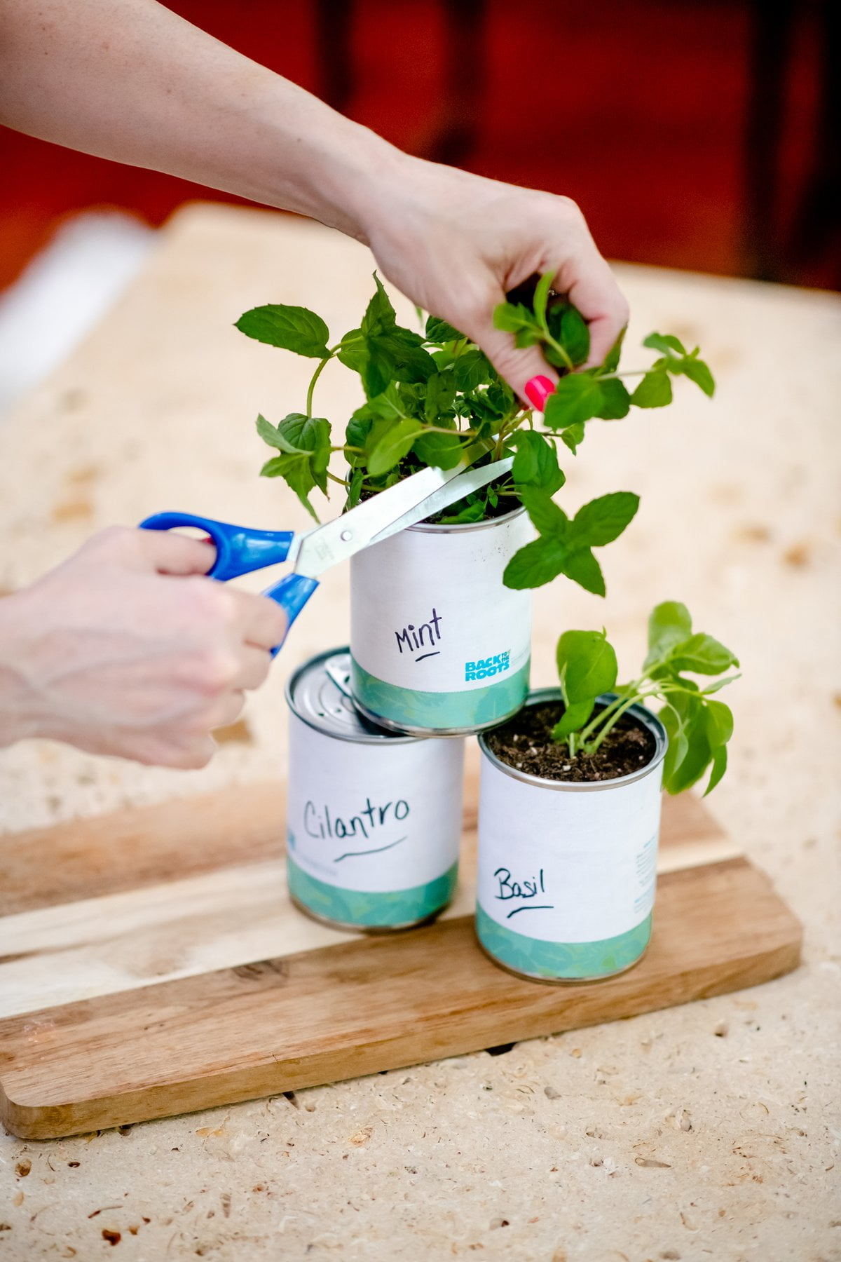 Add Some Green and Nurture a Green Thumb